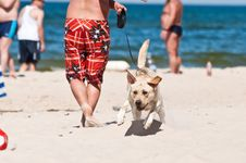 Free Dog On The Beach Stock Image - 15234851