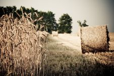 Free Rolling Haystack And Wheat Stock Images - 15234874
