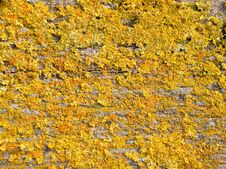 Free Texture Of Lichen Royalty Free Stock Photography - 15236957