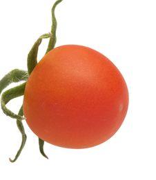 Free Tomato. Stock Image - 15237631