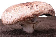 Free Mushroom Royalty Free Stock Image - 15238936