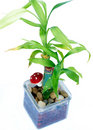 Free Small Plant Stock Image - 15242981