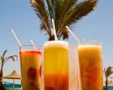 Free Fresh Cocktails Opposite Big Palm. Stock Photo - 15240450