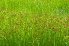 Free Plenty Of Grass Fields Royalty Free Stock Photos - 15241808