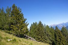 Free Trees In The Mountains Royalty Free Stock Photos - 15243698