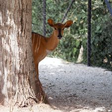Free Deer Stock Photography - 15244482