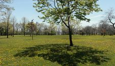 Free Panorama Of Park In Spring Royalty Free Stock Photo - 15246495