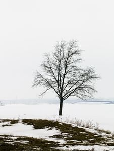 Free Tree In The Winter Stock Photo - 15248100