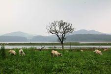 Free Sheep And Natural Royalty Free Stock Photography - 15248867