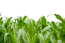 Free Grass Stock Photography - 15248932
