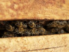 Free Bee Inside A Beehive Royalty Free Stock Photos - 152453478