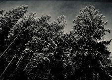 Free Sunshine-wonderland Stock Image - 152453601