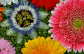 Free Flower Passion And Gerbera Royalty Free Stock Images - 15251069