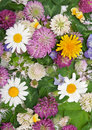 Free Background From Field Flowerses Stock Images - 15253094