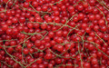 Free Currants Royalty Free Stock Photo - 15256225