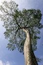 Free Big Tropical Tree Stock Photo - 15257900
