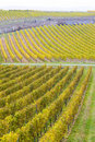 Free Vineyards In Germany Stock Photography - 15258182