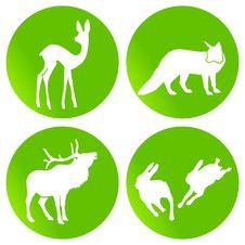 Free Green Wildlife Stock Image - 15250601