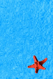 Free Water Background With Red Starfish Royalty Free Stock Photography - 15252267