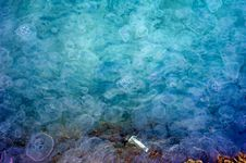 Free Many Jellyfishes In Trieste Royalty Free Stock Photos - 15252568