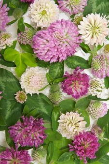 Free Background From Flower Royalty Free Stock Images - 15253059