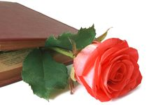 Free Flower Of A Rose Royalty Free Stock Photo - 15253415