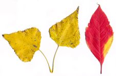Isolated Leaves On White Background Royalty Free Stock Photos