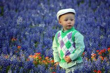 Free Boy In Bluebonnets Royalty Free Stock Photography - 15254607