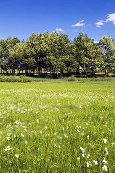 Free Grassland Stock Photography - 15254652