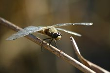 Free Dragonfly Stock Image - 15254921