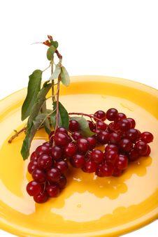 Free Bird Cherry Berry Royalty Free Stock Photography - 15255467