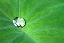 Free Drop On Leaf Royalty Free Stock Photos - 15255768