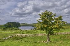 Free Isolated Tree Near Hadrian S Wall Royalty Free Stock Photography - 15255947