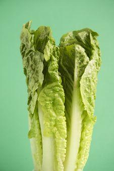 Free Romaine Lettuce Stock Photos - 15256033