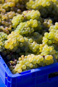 Free Wine Harvest Stock Photography - 15258142