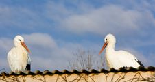 Free Storks Breeding Royalty Free Stock Images - 15258189