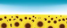 Free Summer Meadow, Sunflowers Field Stock Image - 15259711