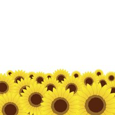 Free Summer Meadow, Sunflowers Background Stock Photo - 15259720