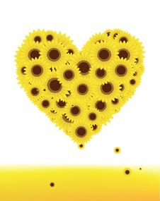Free Sunflowers Heart Shape For Your Design, Summer Royalty Free Stock Image - 15259726