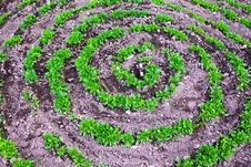 Free Flowers Growing A Spiral Stock Images - 15260584
