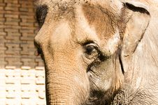 Free Elephant Stock Photography - 15261792