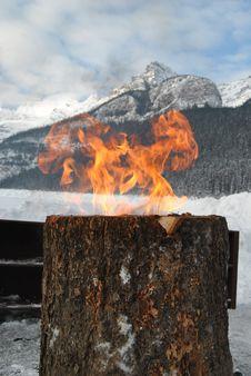 Free Fire Tree Royalty Free Stock Photo - 15263115