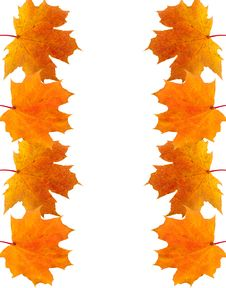 Free Frame Of Autumn Maple Leaves Stock Photography - 15263192