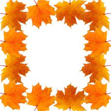 Free Frame Of Autumn Maple Leaves Royalty Free Stock Image - 15263206