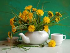 Free Still Life With Dandelions In A Tea-pot Stock Photos - 15264343