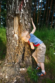 Free Boy In Forest Royalty Free Stock Photography - 15264527
