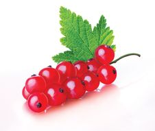 Free Red Currant Royalty Free Stock Photography - 15264587