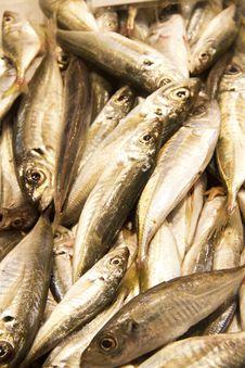 Free Fish Royalty Free Stock Photography - 15265867