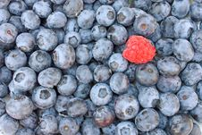 Free Fresh Blueberries And Raspberry Stock Photo - 15265970