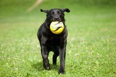 Free Dog With Ball Stock Photos - 15265973